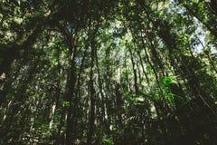 Floresta luxúria Fotos de Stock Royalty Free