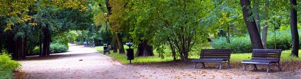 Floresta luxúria Imagens de Stock