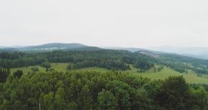 Floresta luxúria contra o céu vídeos de arquivo