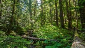 Floresta luxúria 642 de Oregon filme