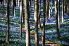 Floresta mágica foto de stock