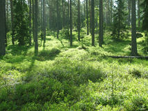 Floresta mágica Fotos de Stock