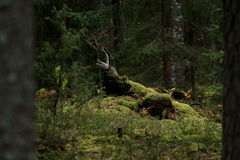 A floresta mágica foto de stock royalty free