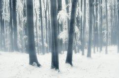 Floresta mágica do inverno Imagens de Stock