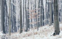 Floresta mágica do inverno com geada e neve Imagem de Stock