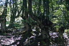 Floresta mágica no sol imagem de stock