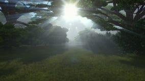 Floresta mágica, sol que shinning através das árvores ilustração royalty free