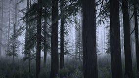 Floresta mágica - versão da noite ilustração royalty free