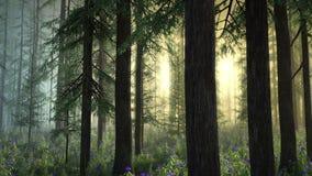 Floresta mágica - versão matizada da névoa ilustração royalty free