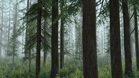 Floresta mágica - versão nevoenta ilustração royalty free