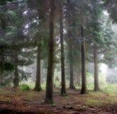 Floresta místico Imagens de Stock Royalty Free