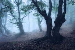 Floresta místico do outono na névoa na manhã Árvore velha foto de stock