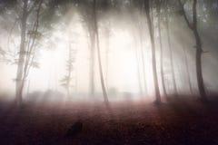 Floresta místico durante um dia nevoento fotografia de stock royalty free