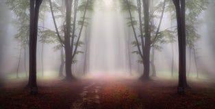 Floresta místico durante um dia nevoento imagem de stock