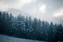 Floresta místico nas montanhas O sol que quebra com imagens de stock