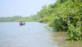 A floresta a maior dos manguezais do mundo em Bangladesh próximo um rio bonito Imagens de Stock Royalty Free