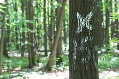 Floresta marcada da árvore fotografia de stock royalty free