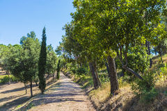 Floresta mediterrânea Imagem de Stock Royalty Free