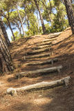 Floresta mediterrânea Fotos de Stock