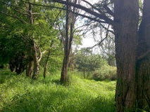 Floresta mexicana Fotos de Stock Royalty Free