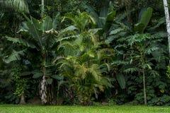 Floresta úmida Fotografia de Stock