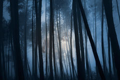 Floresta misteriosa Fotografia de Stock