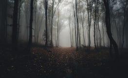 Floresta misteriosa assustador escura com névoa Imagem de Stock