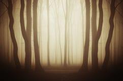 Floresta misteriosa com névoa no alvorecer Imagens de Stock Royalty Free