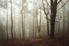 Floresta misteriosa do outono com névoa Imagem de Stock Royalty Free