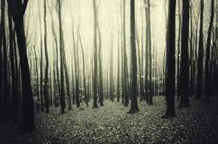 Floresta misteriosa escura com árvores pretas Fotos de Stock Royalty Free