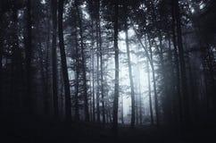 Floresta misteriosa escura com fundo da névoa Fotografia de Stock