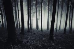 Floresta misteriosa escura com névoa Fotos de Stock Royalty Free