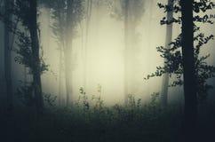 Floresta misteriosa escura com névoa grossa Imagem de Stock Royalty Free
