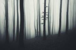 Floresta misteriosa surreal com névoa em Dia das Bruxas Imagem de Stock