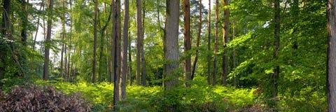 Floresta misturada Fotografia de Stock Royalty Free