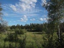 Floresta misturada 3 imagens de stock