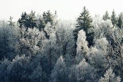 Floresta misturada do inverno na neve imagem de stock royalty free