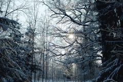 Floresta misturada do inverno na neve fotos de stock
