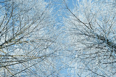 Floresta misturada do inverno na neve fotografia de stock royalty free