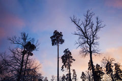 Floresta misturada do inverno na neve imagens de stock royalty free
