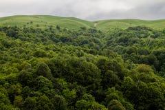 Floresta, montes, prados verdes, e nuvens Fotos de Stock