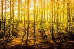 Floresta morna da luz solar foto de stock