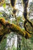 Floresta Mossy fotografia de stock