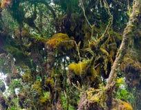 Floresta musgoso fotografia de stock