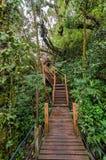 Floresta musgoso de Gunung Brinchang, Cameron Highlands foto de stock