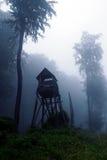 Floresta Mystical imagens de stock