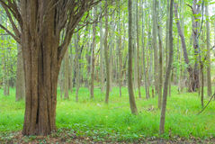 Floresta Mystical fotos de stock