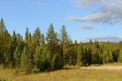Floresta na borda do monte foto de stock