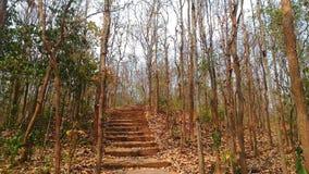 Floresta na estação quente Foto de Stock