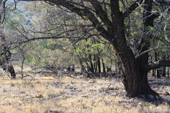 Floresta na exploração agrícola em África do Sul Foto de Stock